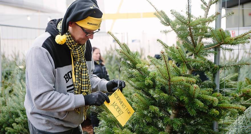 Bvb Weihnachtsbaum.Oh Tannenbaum Ohh Tannenbaum Weihnachtsbaum Nur Noch Bis Samstag